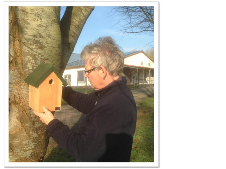 Bird Box fixed to tree at Garway Community Centre